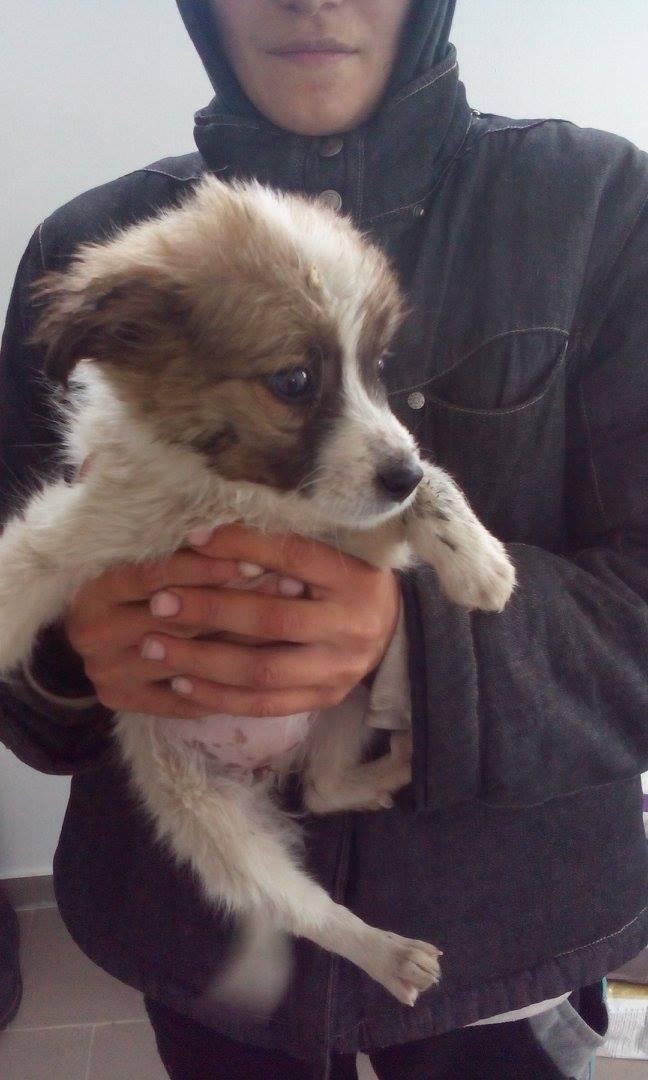 MUSTELA, chiot femelle petite taille née env juillet 2015 - en pension chez Lucian 11222210