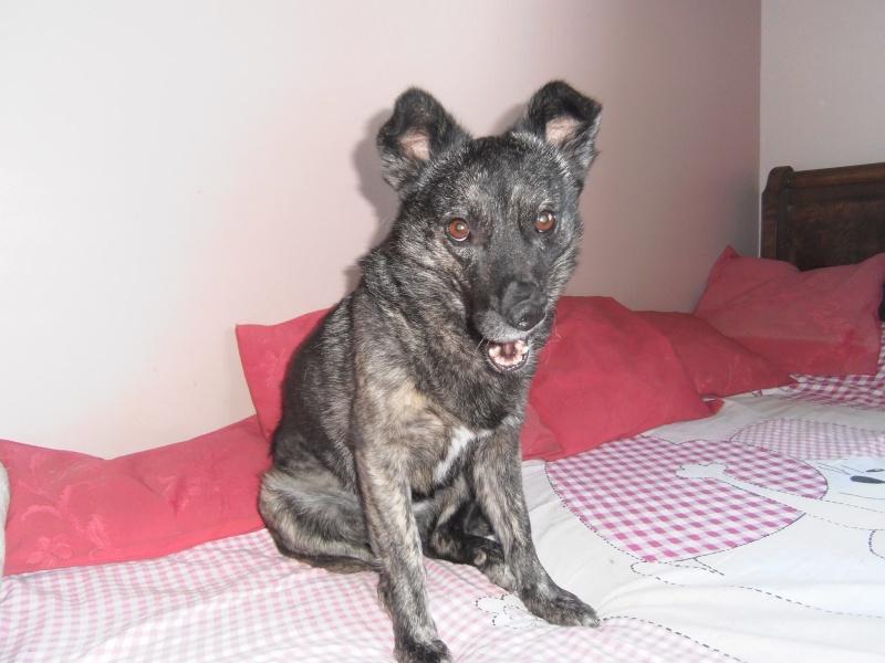 florin - BAILA (ex. MAMINA) - femelle croisée, née en 2012, taille petite à moyenne, (PASCANI) - adoptée par Elyane (dpt82) 12185910