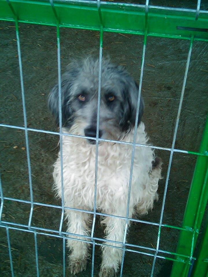 NANNY - x mioritic 2 ans    -  Asso Remember Me  (Roumanie) 12207710