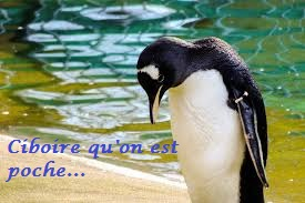 Bilan des Pingouins Images22