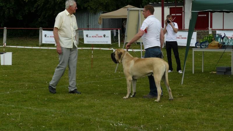 résultats Eros et Estrella ( allias xéna) 2011 Dogsho10