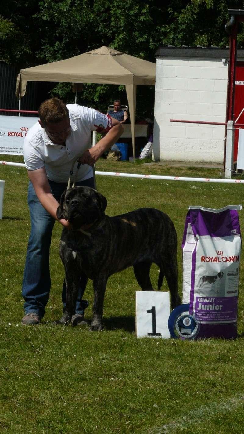 résultats Eros et Estrella ( allias xéna) 2011 Dogsho15