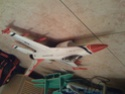 rc edf plane for sale!! Img_0010