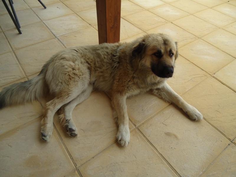 Leo, now homed :-) Dsc00212