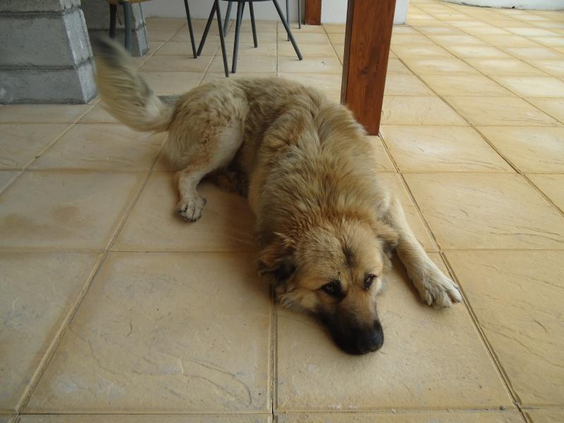 Leo, now homed :-) Dsc00213