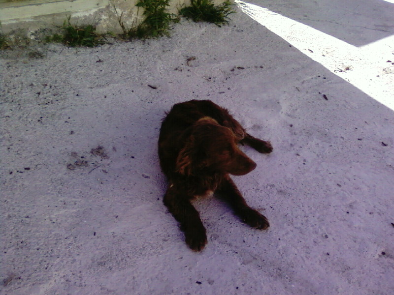 Another Found Puppy Photo-10