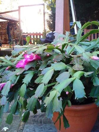 quelle est cette plante Img_0311