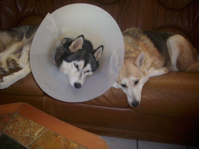 Message de soutien pour Pascale et pour son amour Baxter ( attaqué par des chiens ) - Page 2 Fin_oc10