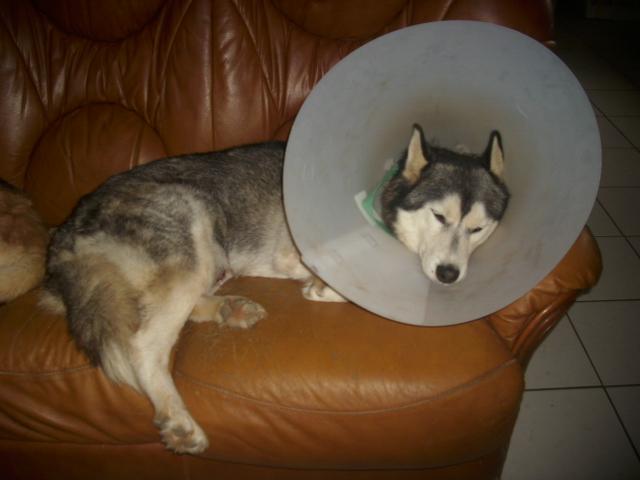 Message de soutien pour Pascale et pour son amour Baxter ( attaqué par des chiens ) - Page 2 Fin_oc11