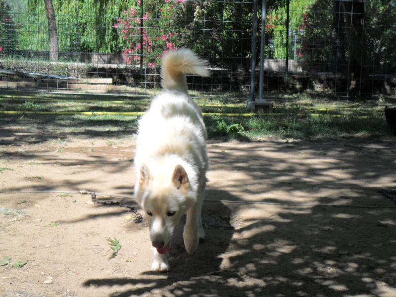 Orca, Husky, âgée de 14 ans née 20 Décembre 2000,  Eden Valley  ASSO39 Orca_p11