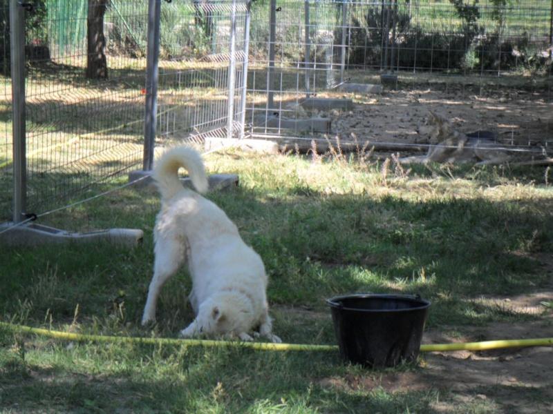 Orca, Husky, âgée de 14 ans née 20 Décembre 2000,  Eden Valley  ASSO39 Orca_s10