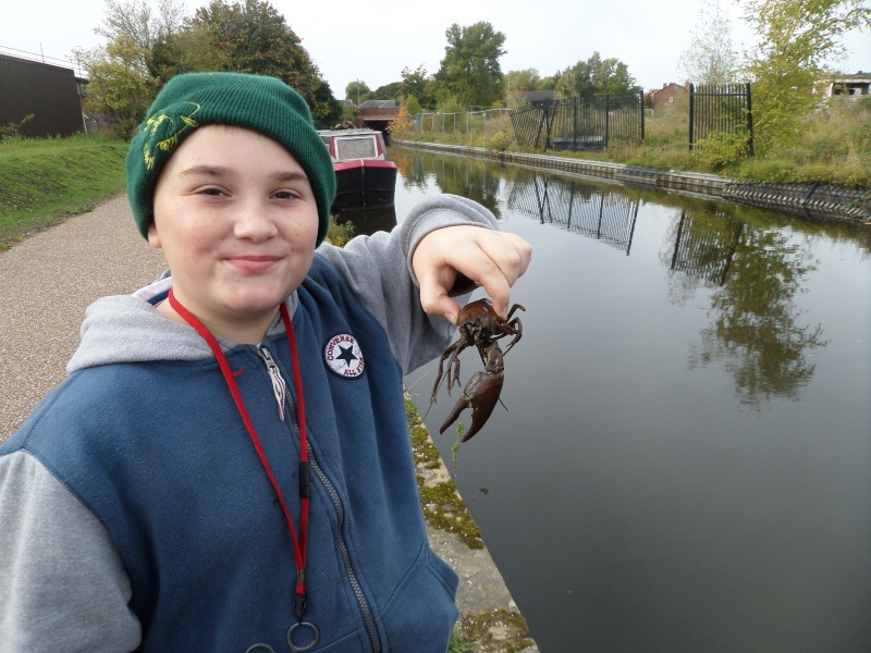 Perch,crayfish and a butterfly Sam_2445