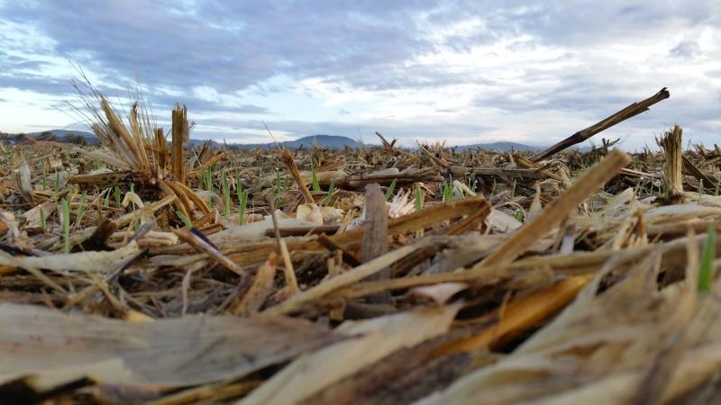 Debut des semis de blé - Page 6 20151014