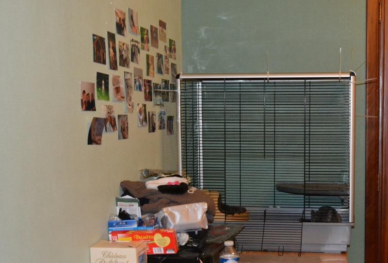 Cage jenny KD à vendre BELGIQUE Dsc_0410