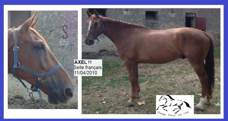 ARRISON dit AXEL - SF né en 2010 - adopté en janvier 2016 par Céline Axel10