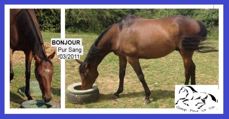BONJOUR - PS né en 2011 - adopté en septembre 2016  Bonjou10