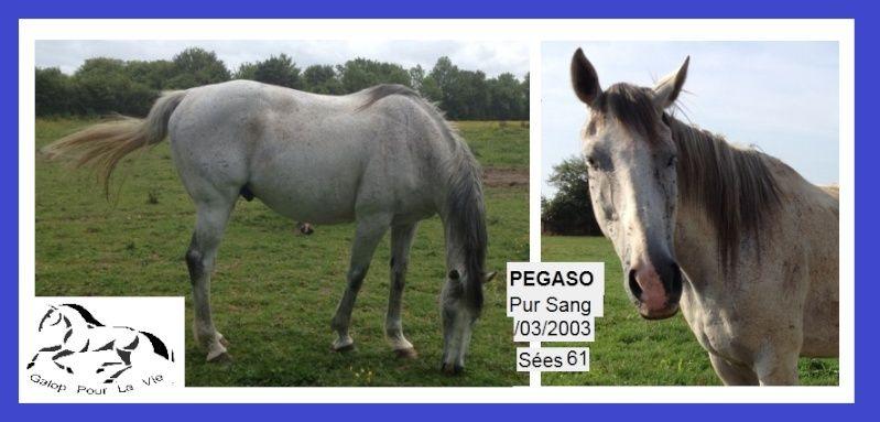 PEGASO - PS né en 2003 - adopté en août 2016 par Manon Peg10