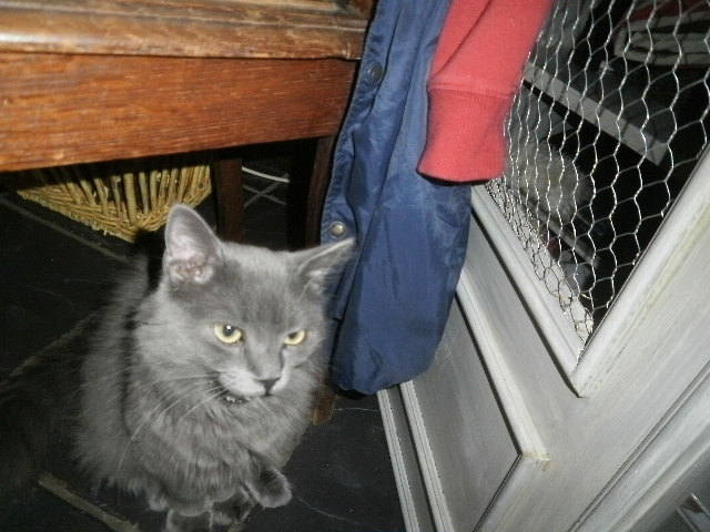 Toulouse chaton gris de 3 mois. - Page 3 Photo_12