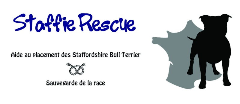 Staffie Rescue France