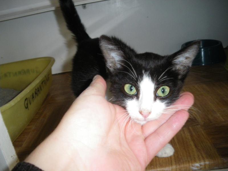 ANGE (chaton mâle noir et blanc) Imgp0010