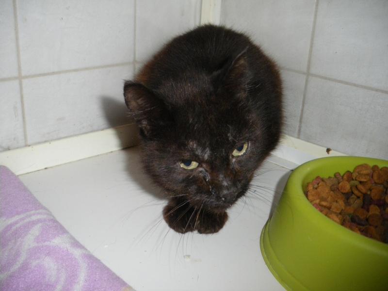 XENA ( chatte noire ) Imgp0028