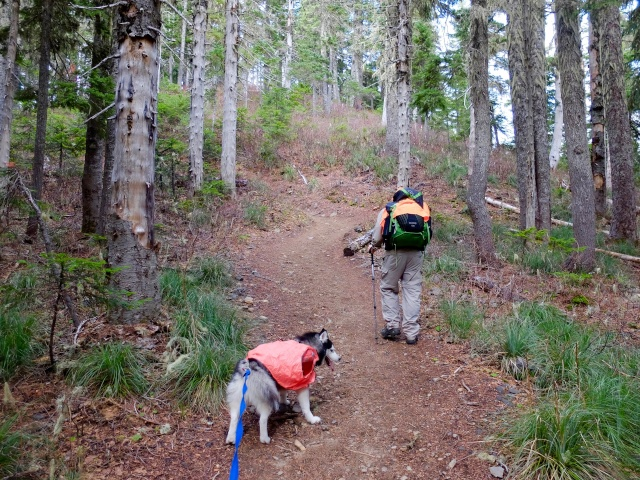 Hiking with Dogs: Indian Heaven Wilderness, WA 210