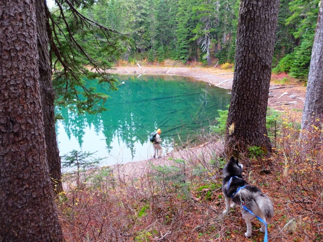 Hiking with Dogs: Indian Heaven Wilderness, WA 510