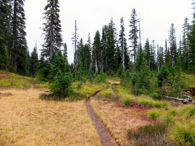 Hiking with Dogs: Indian Heaven Wilderness, WA 710