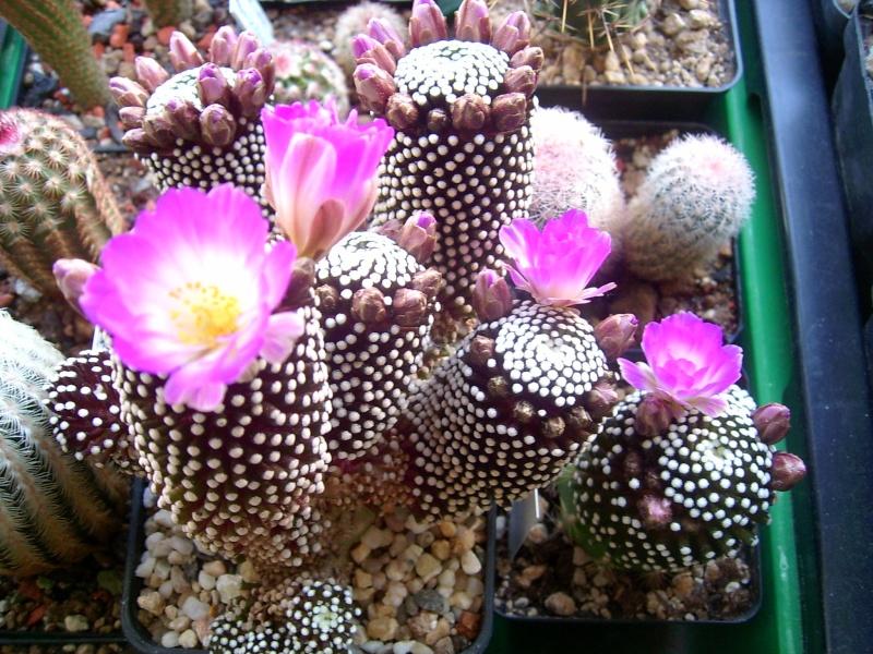 Achim`s Blütenbalkon - Seite 2 Pic_0073