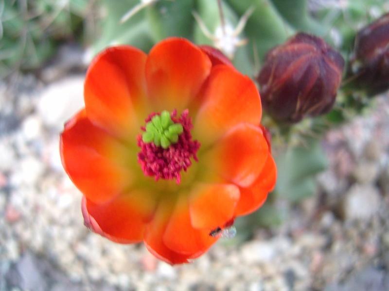 Achim`s Blütenbalkon - Seite 3 Pic_0085