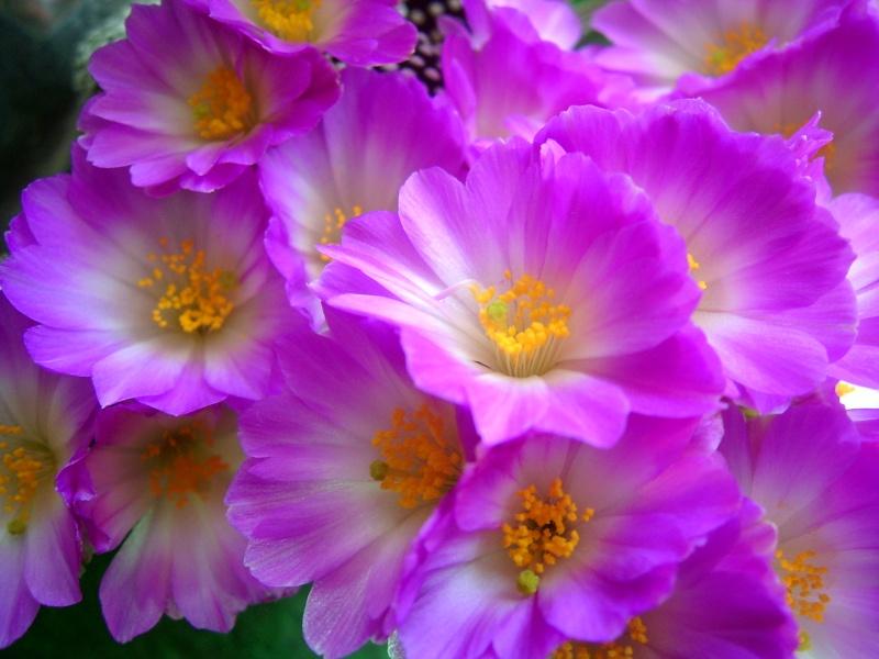 Achim`s Blütenbalkon - Seite 3 Pic_0088