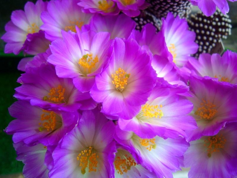 Achim`s Blütenbalkon - Seite 3 Pic_0089