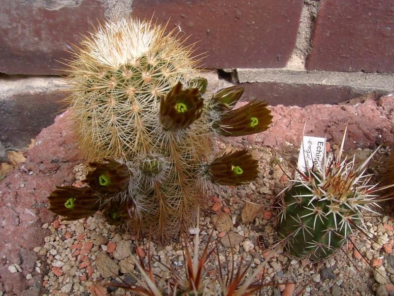 Achim`s Blütenbalkon - Seite 4 Pic_0104