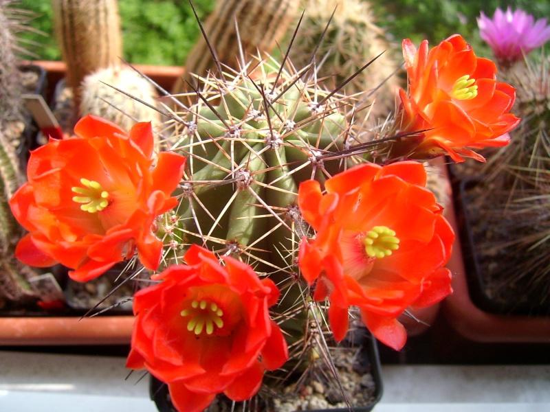 Achim`s Blütenbalkon - Seite 5 Pic_0124