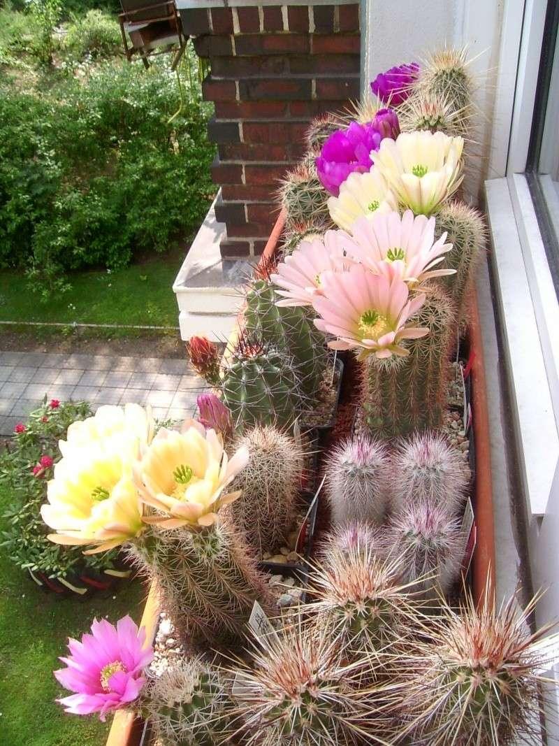 Achim`s Blütenbalkon - Seite 5 Pic_0129