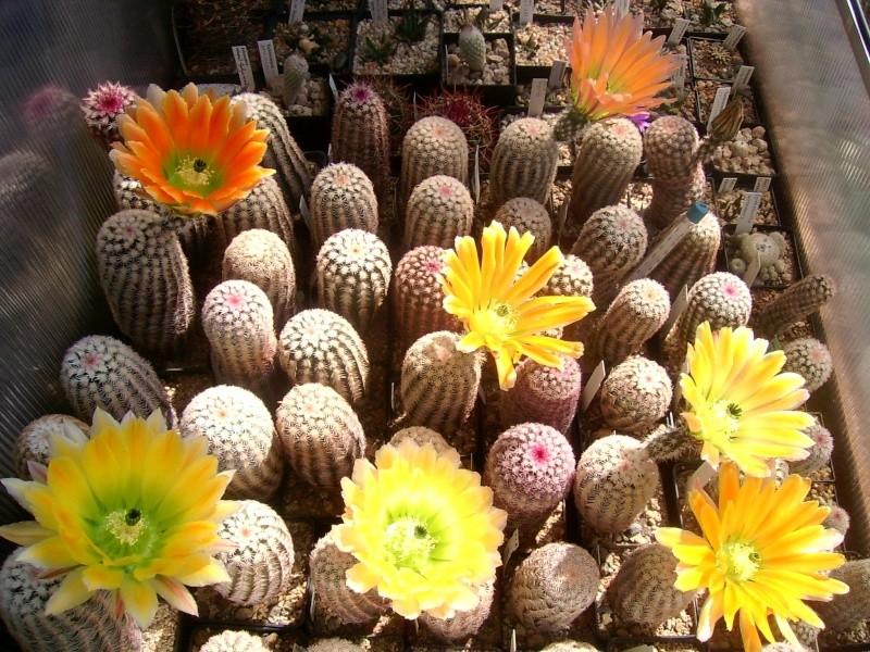 Achim`s Blütenbalkon - Seite 6 Pic_0142