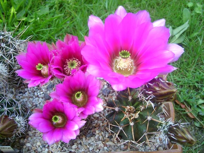 Achim`s Blütenbalkon - Seite 6 Pic_0145