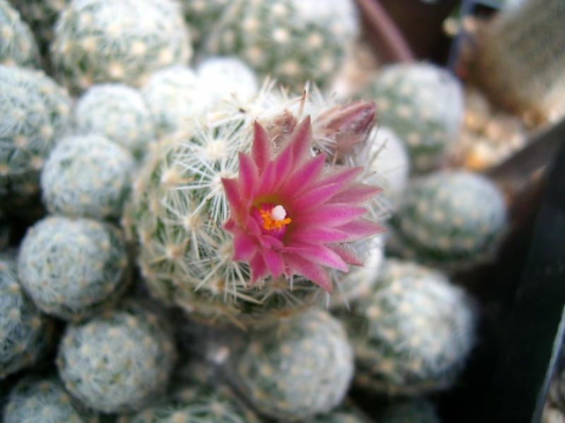Achim`s Blütenbalkon - Seite 6 Pic_0162