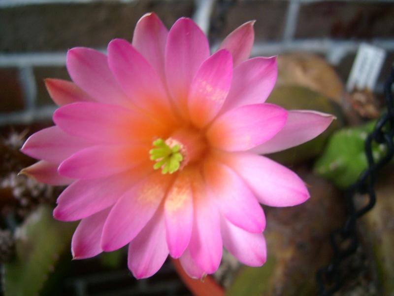 Achim`s Blütenbalkon - Seite 6 Pic_0169