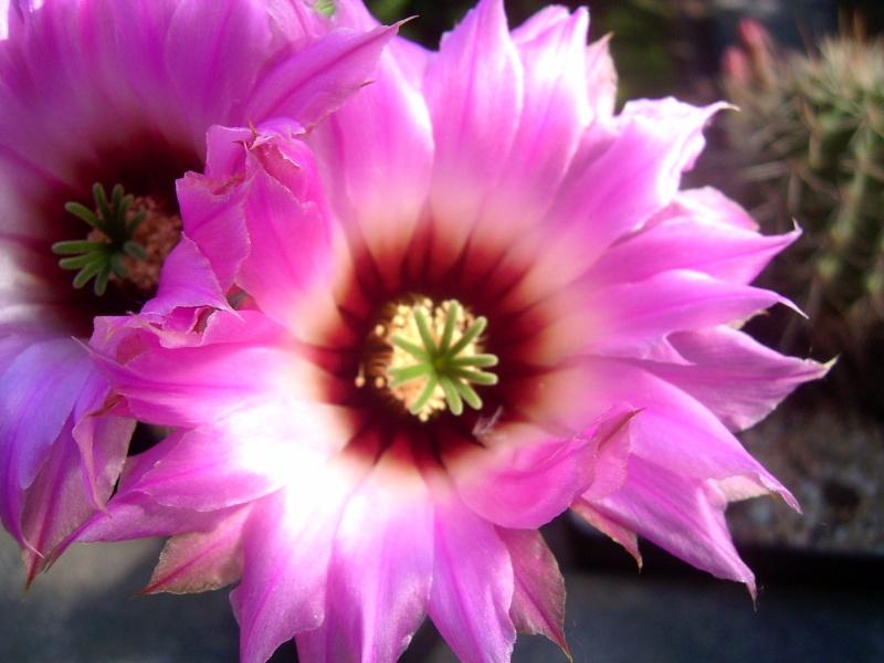 Achim`s Blütenbalkon - Seite 6 Pic_0171