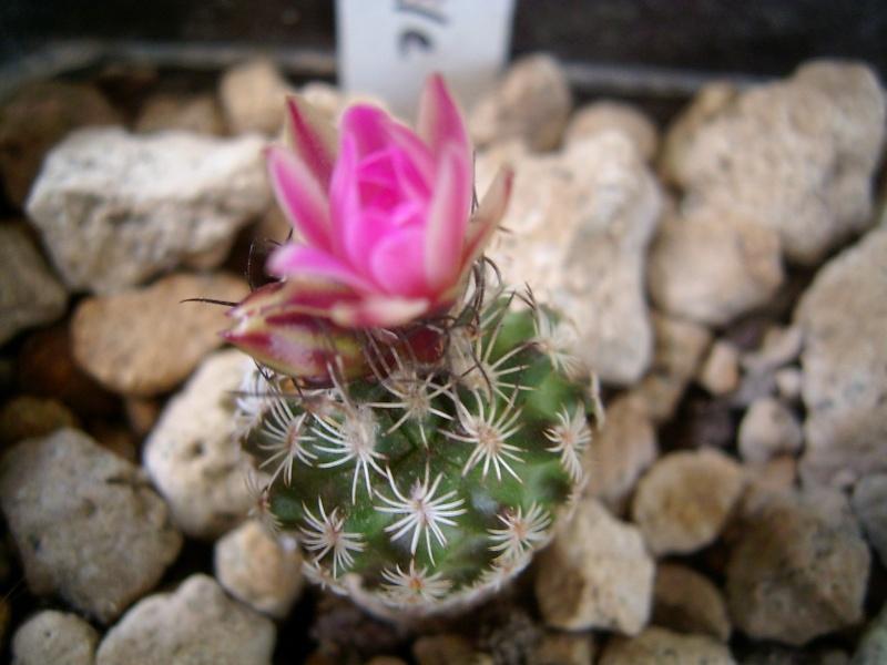 Achim`s Blütenbalkon - Seite 9 Pic_0299