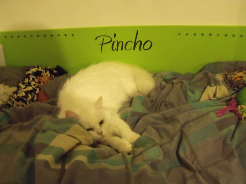 Petit journal de Pincho - Page 15 Dscf9711