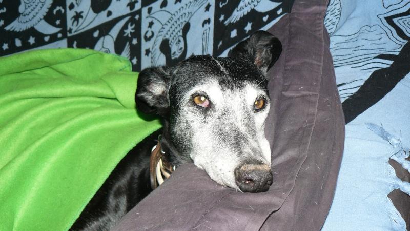Florence Squelette de Merida à l'adoption  Scooby France    Adoptée  - Page 11 046_610