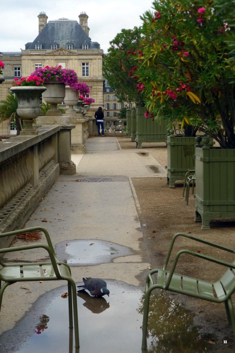 Choses vues dans le jardin du Luxembourg, à Paris - Page 4 Aout_213