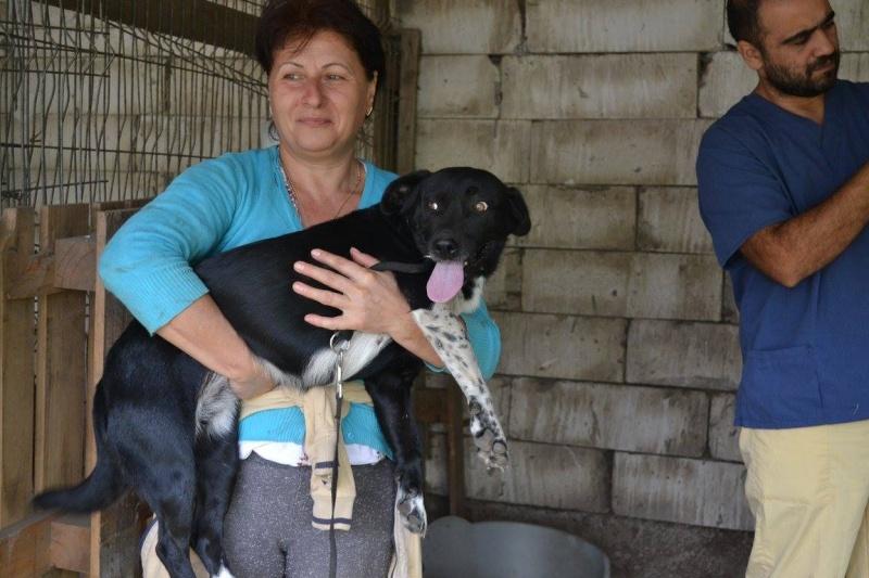 LAHIKA née en 2013 sauvée d'Oltenita (EN FA DANS LE DEPT 95) -  Laika10