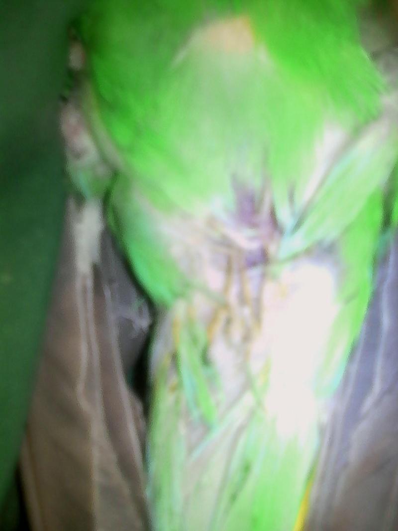 probléme avec mon male perruche ondulée 01212