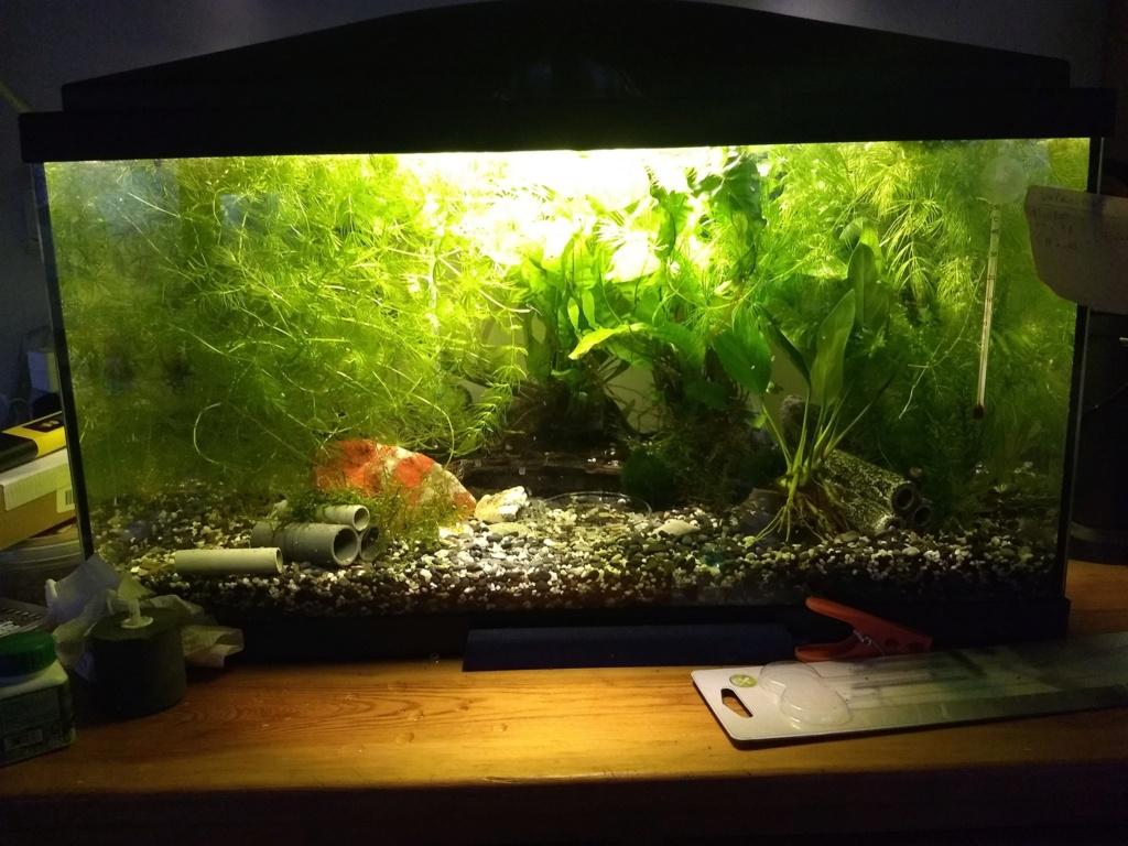 Mon 60L Aquari10
