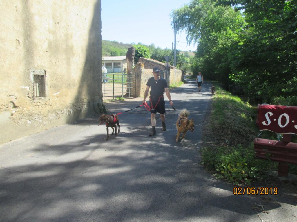Randô chien 6 ème edition😊 Img_1812