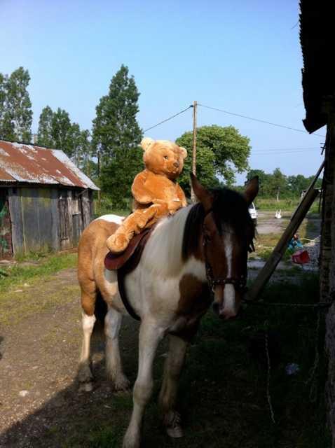 Thème de Juin : Le Mois des Copains (copains non équins et non humains!!!) - Page 3 Premie10