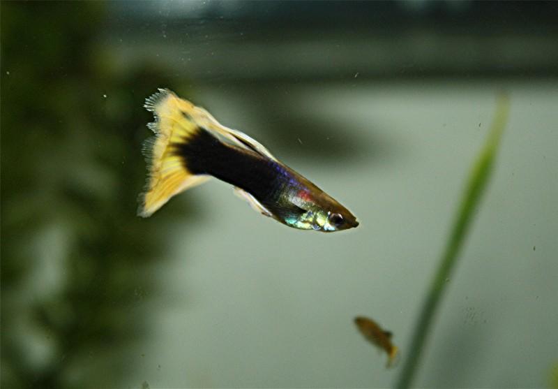 aquarium!!!! Web_po11
